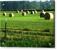 Indiana Hay Acrylic Print