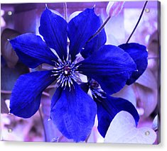 Acrylic Print featuring the photograph Indigo Flower by Milena Ilieva