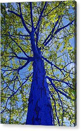 Indigo Tree Acrylic Print