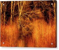 Inferno Acrylic Print by Wim Lanclus