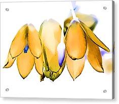 Inflorescence I Acrylic Print by Gareth Davies