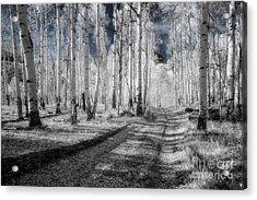 Infrared Aspens Acrylic Print