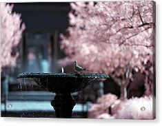 Acrylic Print featuring the photograph Infrared Morning Dove by Brian Hale