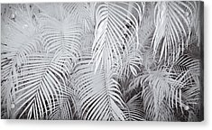 Infrared Palm Abstract Acrylic Print by Adam Romanowicz