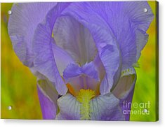 Inner Beauty Acrylic Print by Alice Mainville