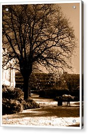 Acrylic Print featuring the photograph Inner Beauty  by Fine Art By Andrew David