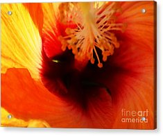 Inner Beauty Acrylic Print by Linda Shafer