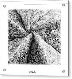 Acrylic Print featuring the photograph Inner Plant Details by Michalakis Ppalis