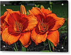Acrylic Print featuring the photograph Innocent Fire by Judy Vincent