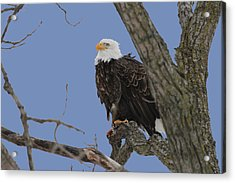 Inqusitive Look Acrylic Print by Dave Clark