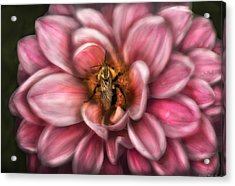 Insect - Bee - Center Of The Universe  Acrylic Print by Mike Savad