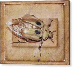 Insect On Wooden Board Acrylic Print