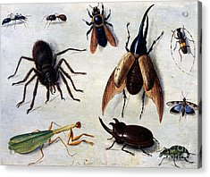 Insects, 1660 Acrylic Print