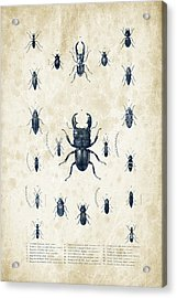 Insects - 1832 - 06 Acrylic Print