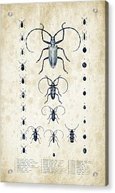 Insects - 1832 - 08 Acrylic Print by Aged Pixel