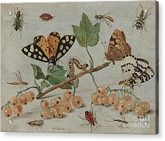 Insects And Fruit, Acrylic Print