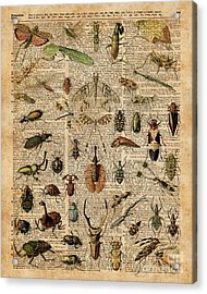 Insects Bugs Flies Vintage Illustration Dictionary Art Acrylic Print by Jacob Kuch