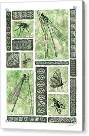 Insects Of Hawaii II Acrylic Print