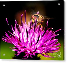 Insects Up Close Acrylic Print by Chris Smith