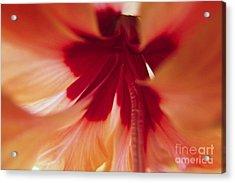 Inside Hibiscus Acrylic Print