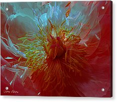 Inside The Heart Of A Peonie Acrylic Print by Sabine Stetson