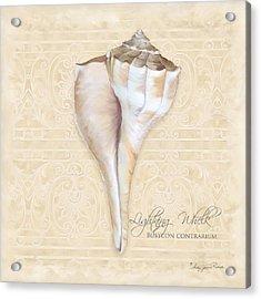 Inspired Coast 3 - Lightning Whelk Shell Busycon Contrarium Acrylic Print