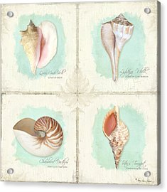 Inspired Coast Quartet - Seashells On Crackle Texture Board Acrylic Print by Audrey Jeanne Roberts