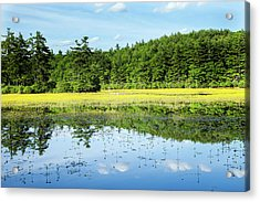 Inspired Acrylic Print by Sue OConnor