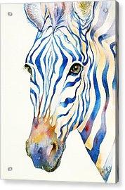 Intense Blue Zebra Acrylic Print