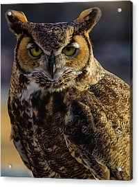 Intense Owl Acrylic Print
