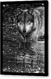 Acrylic Print featuring the photograph Intense Reflection by Shari Jardina