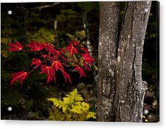 Intensity Acrylic Print by Chad Dutson