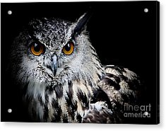 Intensity Acrylic Print by Clare Bevan