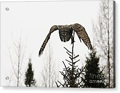 Acrylic Print featuring the photograph Intent On His Prey by Larry Ricker