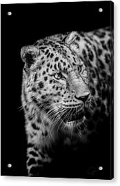 Intent Acrylic Print by Paul Neville