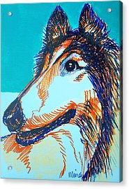 Interested Collie Acrylic Print by Melinda Page