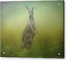 Interrupted Meal Acrylic Print by Wallaroo Images