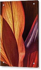 Interweaving Leaves I Acrylic Print