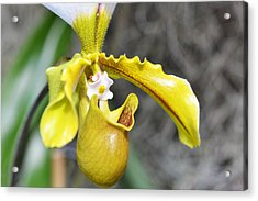 Intimate Orchid 5 - Sharon Cummings Acrylic Print by Sharon Cummings