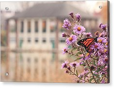 Into The Asters Acrylic Print