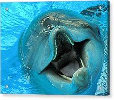 Into The Dolphin Acrylic Print