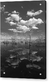 Into The Everglades Acrylic Print by Debra and Dave Vanderlaan
