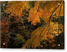 Into The Fall Acrylic Print by Michael McGowan