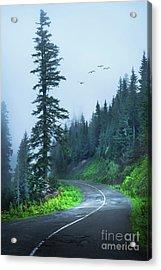 Into The Fog Acrylic Print by Svetlana Sewell