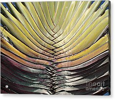 Into The Fold Acrylic Print