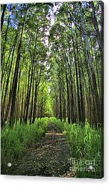 Acrylic Print featuring the photograph Into The Forest by DJ Florek