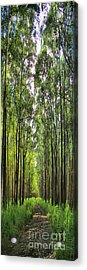 Acrylic Print featuring the photograph Into The Forest I Go by DJ Florek