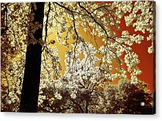 Acrylic Print featuring the photograph Into The Golden Sun by Linda Unger