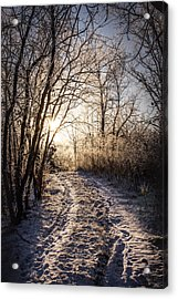 Into The Light Acrylic Print by Annette Berglund