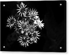 Into The Light Acrylic Print by Silke Brubaker
